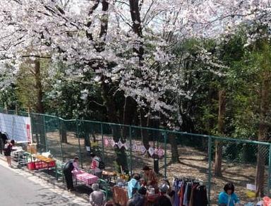 高松桜まつり写真2.png